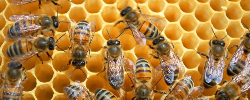 Почему полезна медовая вода?
